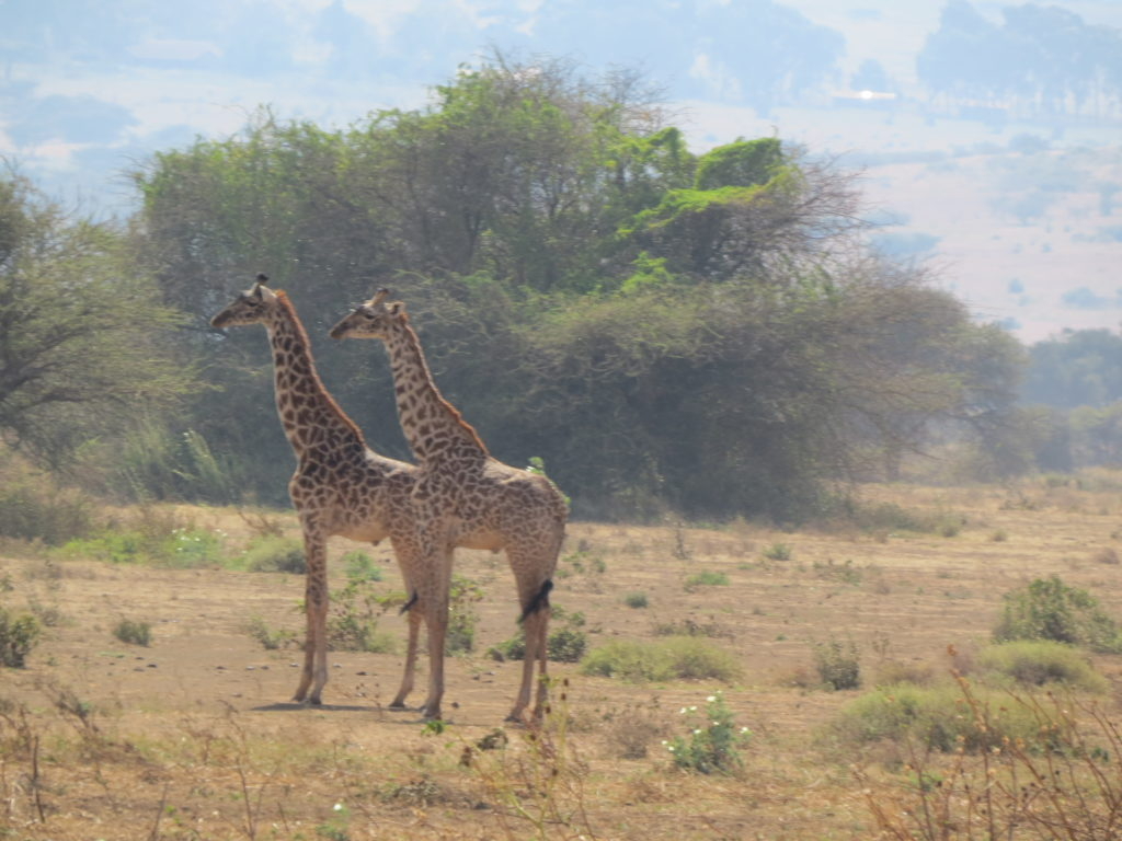 Day Trip to Arusha N.Park