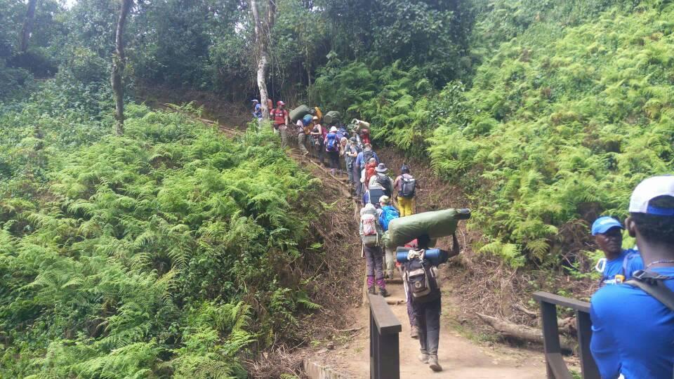 forest camp-kilimanjaro