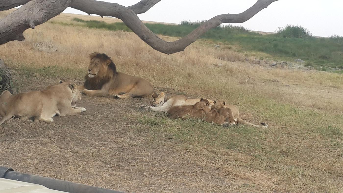 After the trek we take you to safari