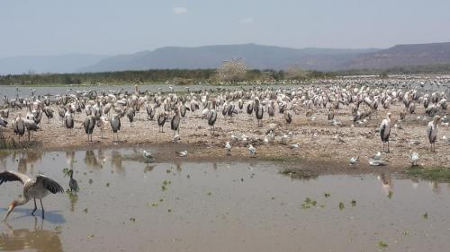 visit lake manyara national park