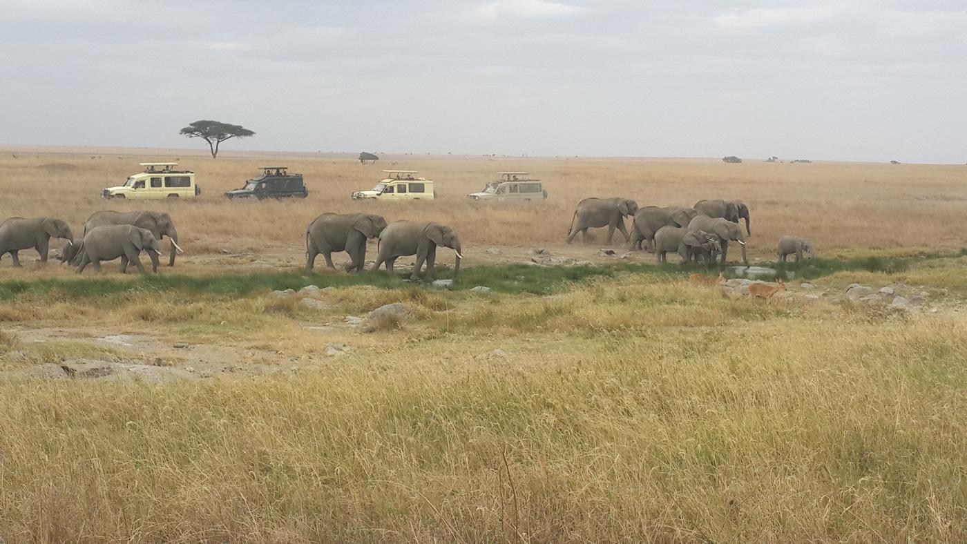 best_tanzania_safari