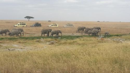best tanzania safari